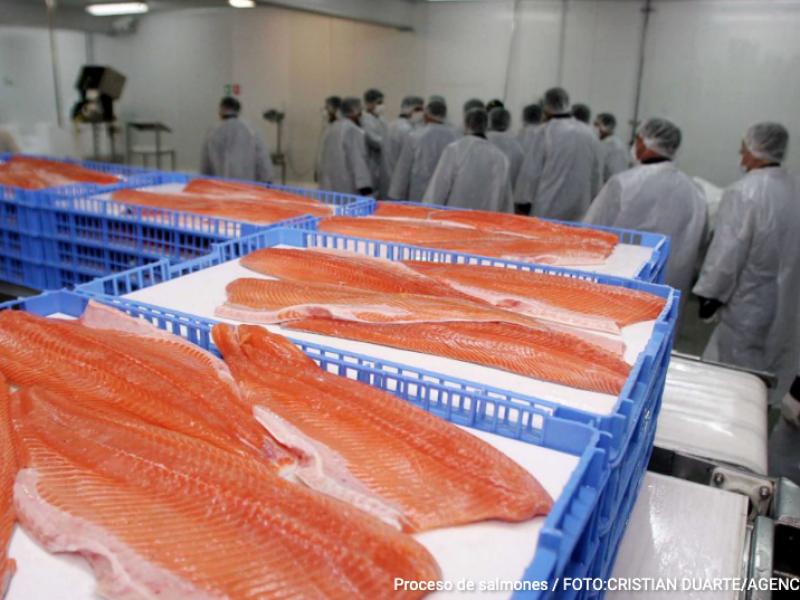 Exportaciones de salmón chileno caen 9,3% en mayo